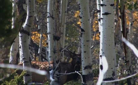 During this second week of in-your-face elk action in the Colorado high country, Associate