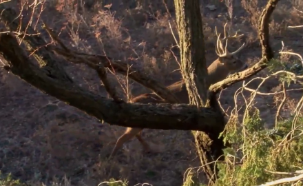 Danny Farris heads to Kansas and is met with a few challenges as he hunts whitetails.