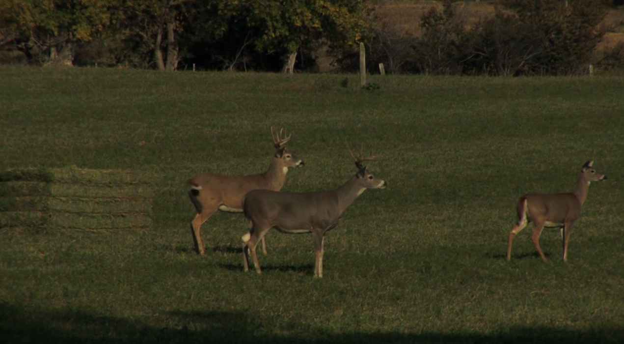 Doubling Down on Wyoming Whitetails