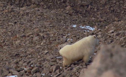 Danny Farris is in pursuit of a Rocky Mountain Sheep.