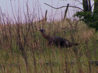 Iowa Turkey Hunt
