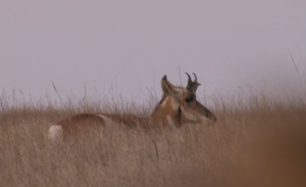 Tony Peterson is on the move in South Dakota in search of antelope.