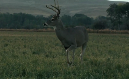 Jeff Millar takes a management buck in Montana.