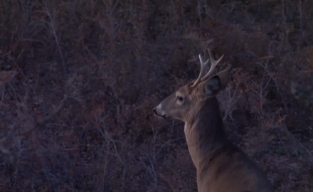 Danny Farris heads to Kansas to hunt whitetails on public land.