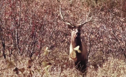 Curt Wells explains how the set-up is crucial to having a successful elk hunt.