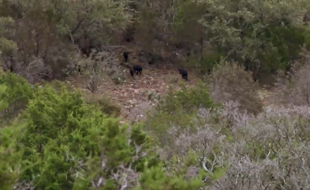 Curt Wells and Brian Fortenbaugh head to the Barnes-Keith Ranch to spot and stalk and employ blinds.