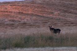 Stickbow Moose