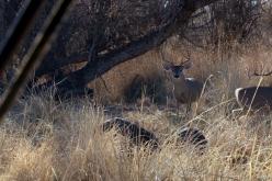 Little Deer 2