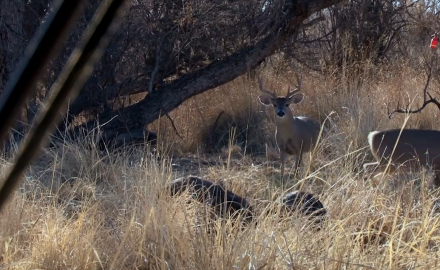 C.J. Winand and Larry D. Jones head to the Arizona desert in search of whitetail. Part 2.