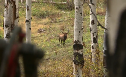 The bowhunter crew shares keys to elk hunting and celebrates the sweet sounds of success.