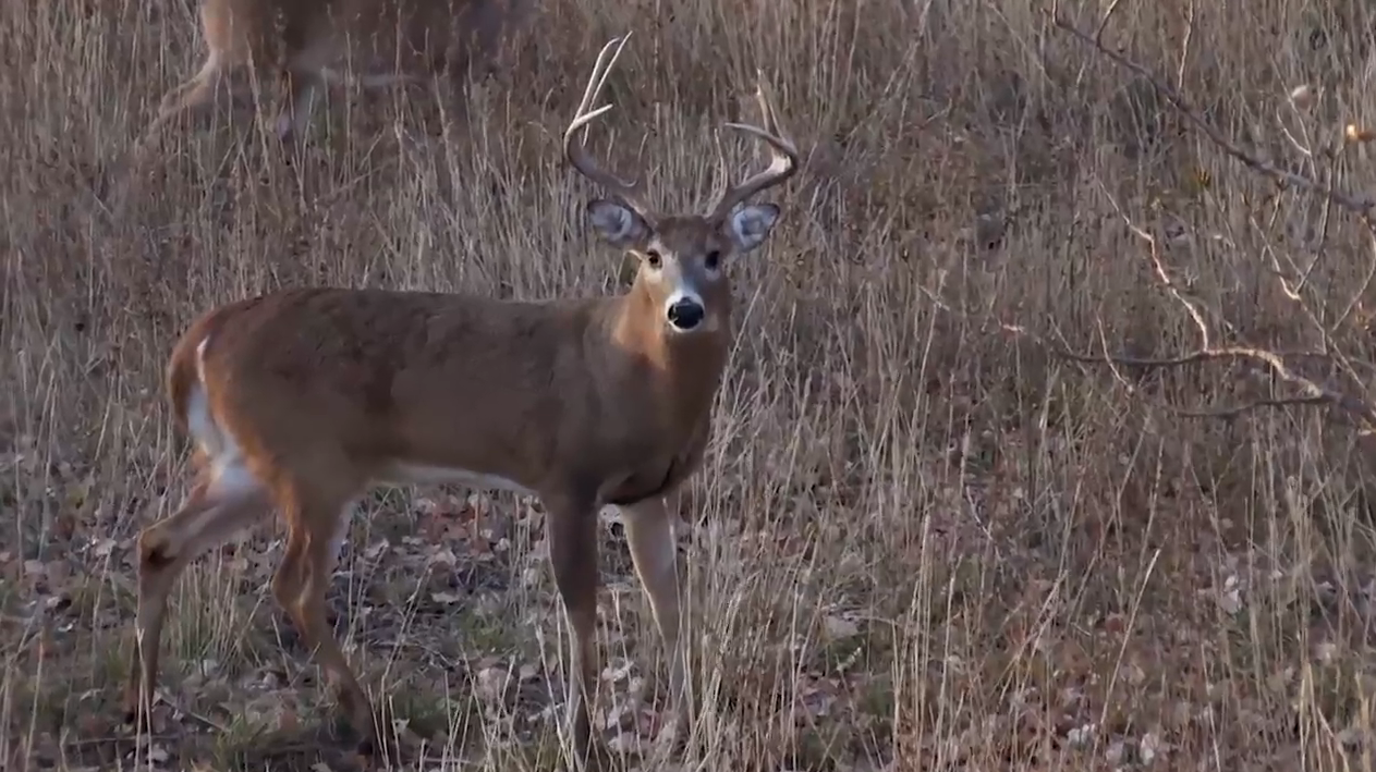Missed Opportunity with a Kansas Whitetail