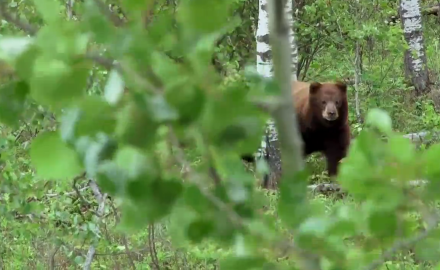 Hunting Editor Dwight Schuh returns to a favorite bear bait site in northern Saskatchewan in the