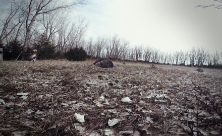 Mike Carney and Equipment Editor, Tony Peterson offer advice on confidence decoys.
