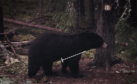 Timing and Placing Shots on Bears