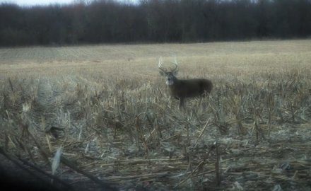 Lessons Learned in the Pursuit of Whitetails