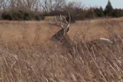 Lock-Down Buck in the Jayhawk State