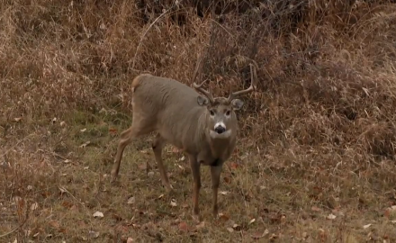 best week of deer hunting action ever