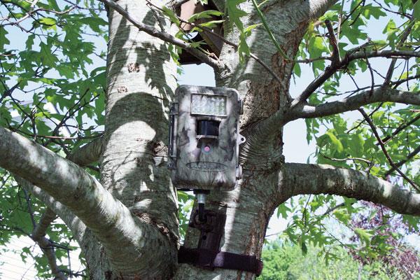 treestand_theft_prevention tactics