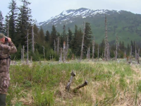 Spot and Stalk Black Bear Hunt in Alaska