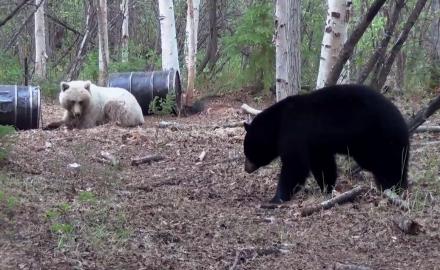 Black Bear Surprises