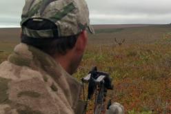 Caribou Frustration in Alaska