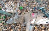 The Biggest Buck of 2014