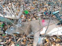 biggest-buck-of-2014-arrowed