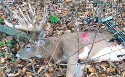 biggest-buck-of-2014-arrowed