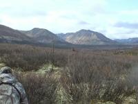 yukon moose hunting