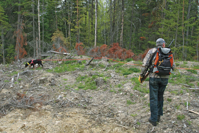 bear-hunting-tracking-dog