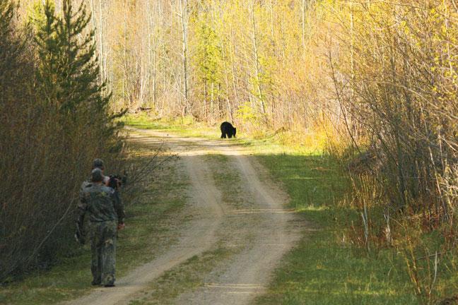 british-columbia-bear-hunting-