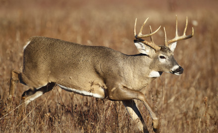 Wild animals have the tendency to move, which makes knowing the exact shot distance crucial. How often you use your rangefinder will affect your bowhunting success. Photo via iStock