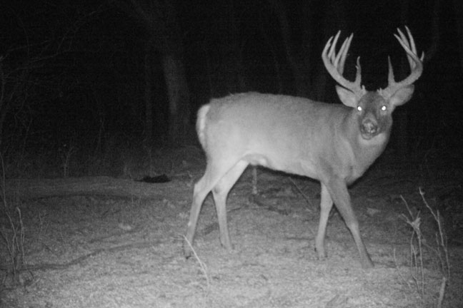 The Quest For 200 Inches Of Kansas Antler Bowhunter