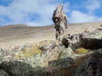 scouting mountain goats