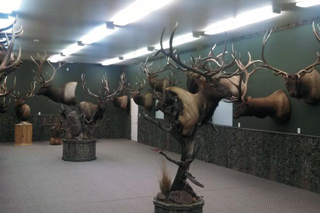 bowhunting-elk-dan-evans