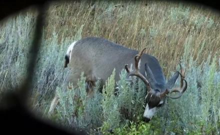hunt unpredictable mule deer