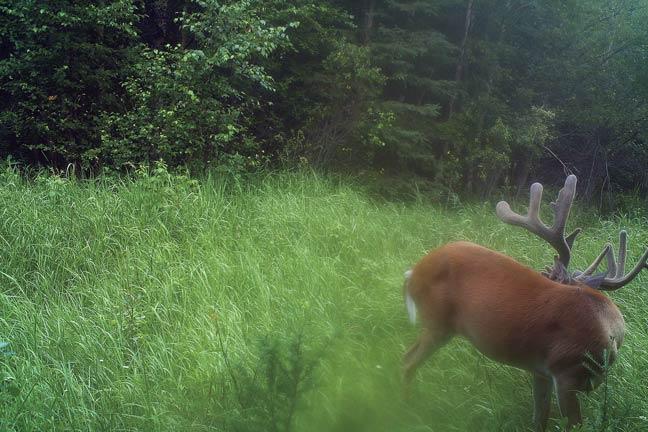 bowhunting-massive-buck