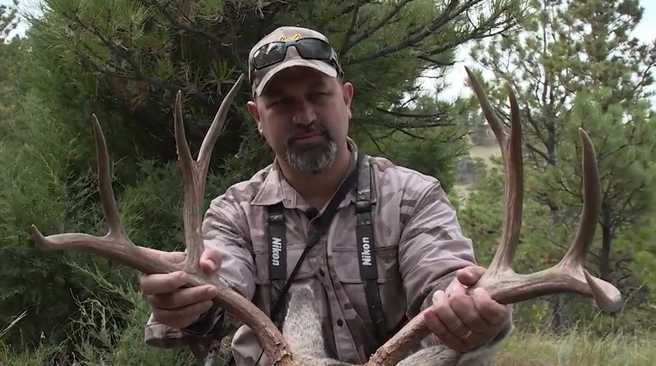 Mule Deer on the Run in Montana