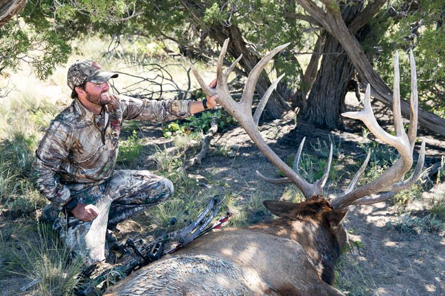 archery-new-mexico-bull