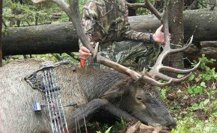 bowhunting-elk-on-public-land