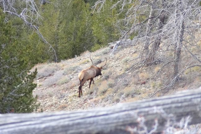 how-to-stalk-elk