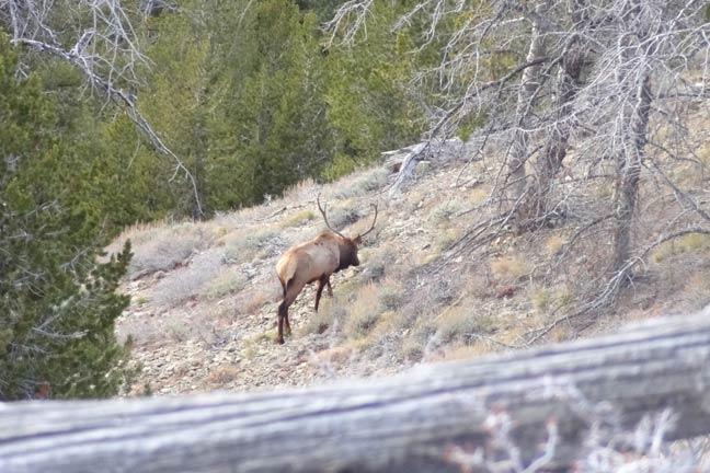 how-to-stalk-elk