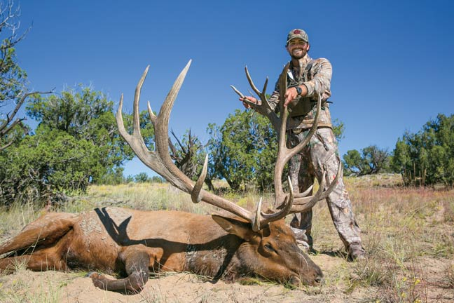 record-new-mexico-bull