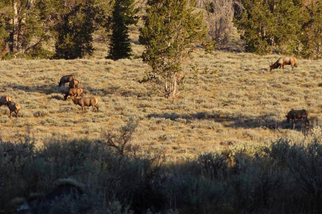 stalk-an-elk-west