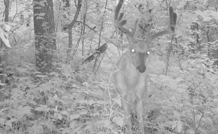 trail-camera-tips-featured
