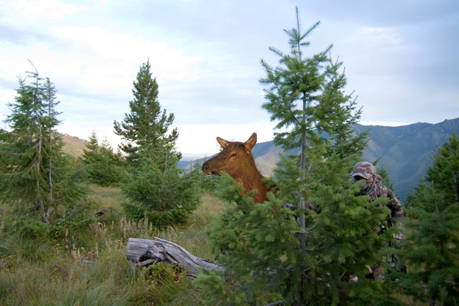 bowhunting-elk-gear-and-essentials