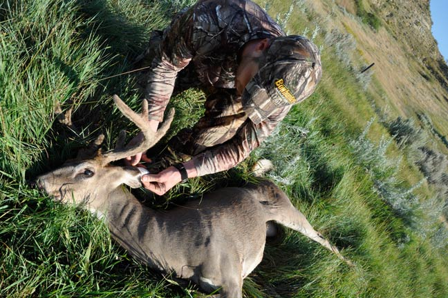how-to-hunt-velvet-whitetails