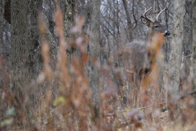 Kill-Whitetail-Deer