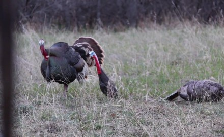 Danny Farris is on his own as he attempts a self-shot three camera turkey hunt in Colorado.