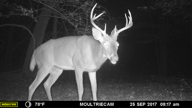 Deer Calling Tips To Help You In The Rut
